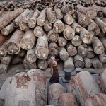 Myanmar jails 153 Chinese illegal loggers for life